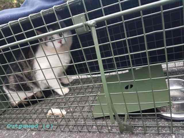 Outpawed TNR Appeal