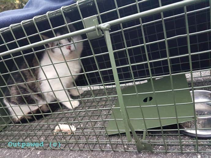 Outpawed Feral Cat Rescue