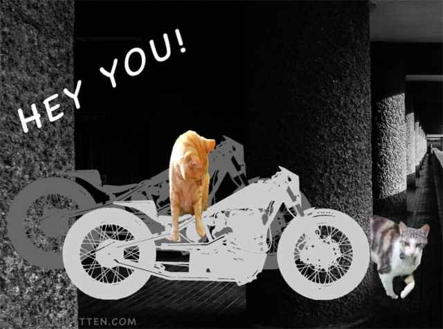 cats in a garage, with motorcyles, cark and gloomy