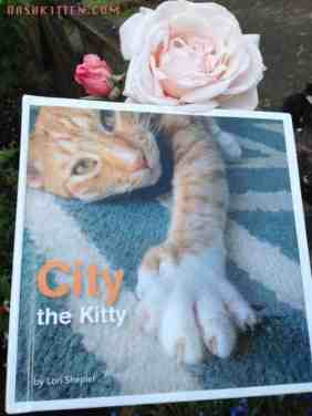 City the Kitty Anti Declawing Chamption