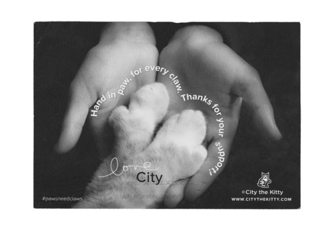 City thre Kitty anti declawing cat hero