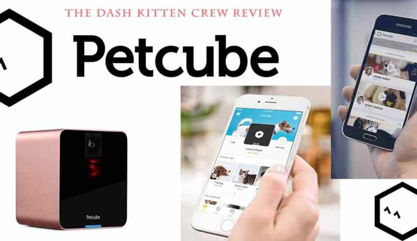 The Putcube Cat Camera