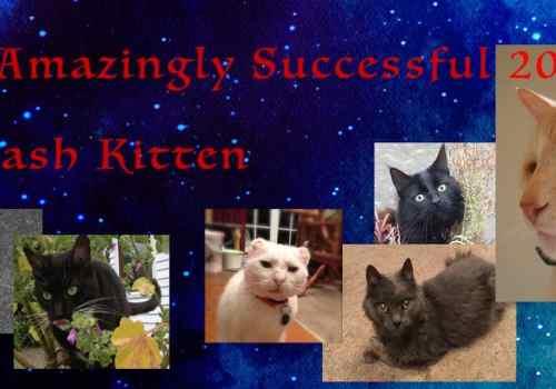 Image of Dash Ktten Cats