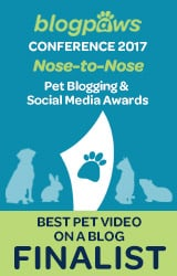 BlogPaws Finalist Best Pet Video Grahic