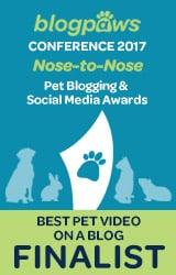 BlogPaws Finalist Best Pet Video Grahic
