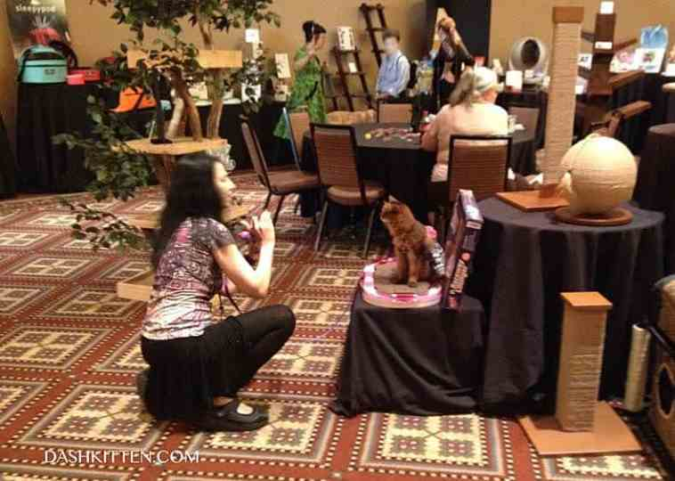 Therapy  Cat Photograph