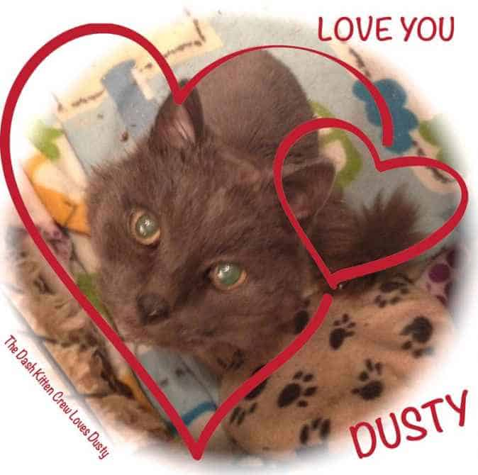 Love Dusty the cat