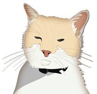 Dash Kitten Logo