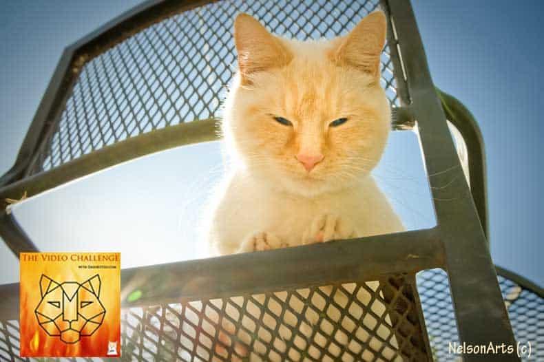 DK Video Challenge Outdoor Cat