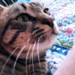 Marv the Cat in Profile
