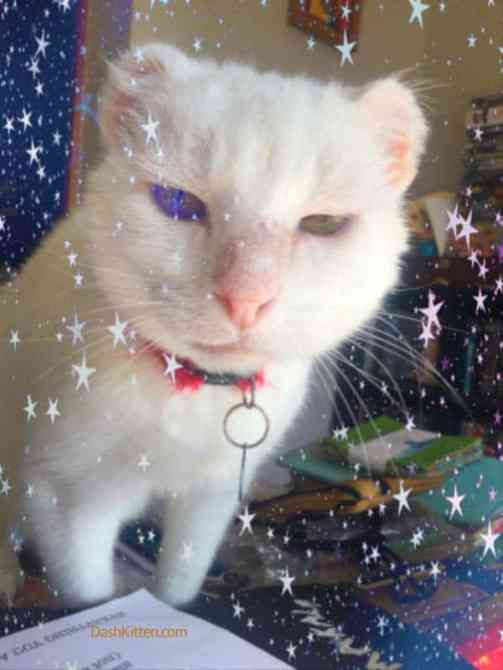 Harvey the Cat Surrounded by stars