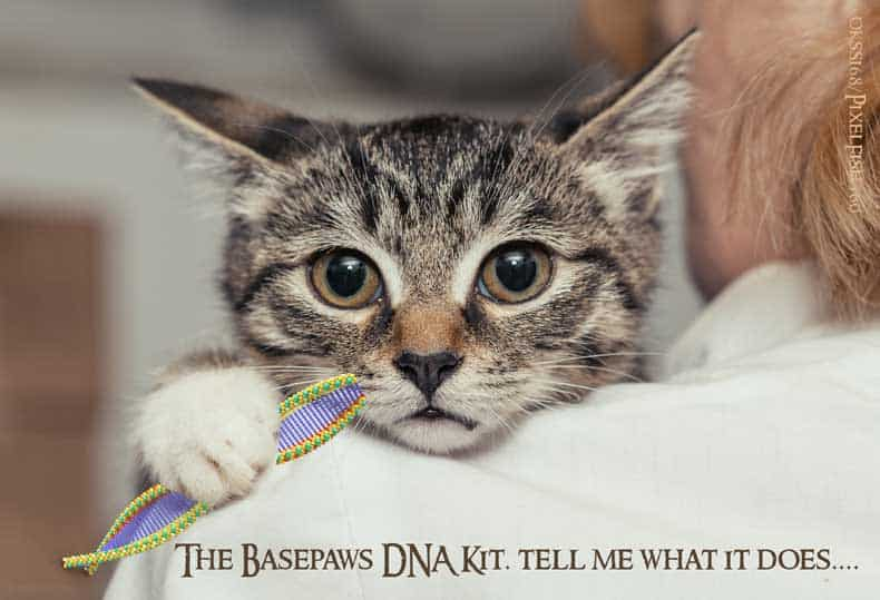 Basepaws CatKit DNA Kit Image