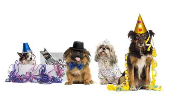 Dogs in the Perfect Pet Movie
