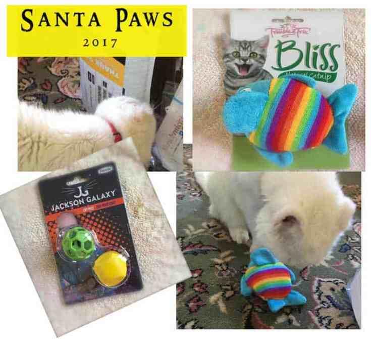 Dash Kitten Santa Paws Report 2017