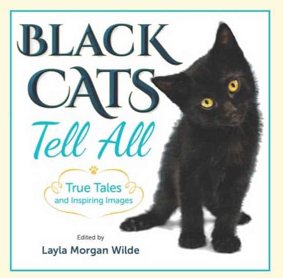 Black Cats Tell All