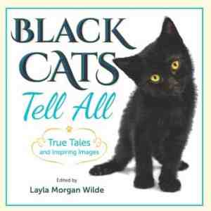 Black Cat Photography progress Black Cats Tell All