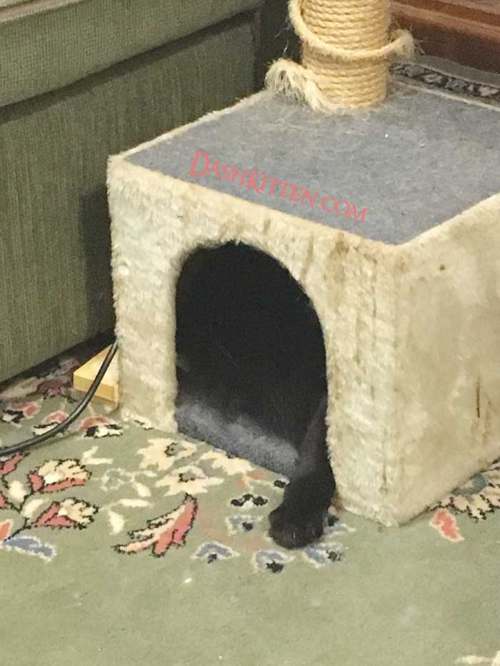 Hidden Phoebe