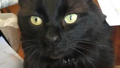 Phoebe close up at Dash Kitten