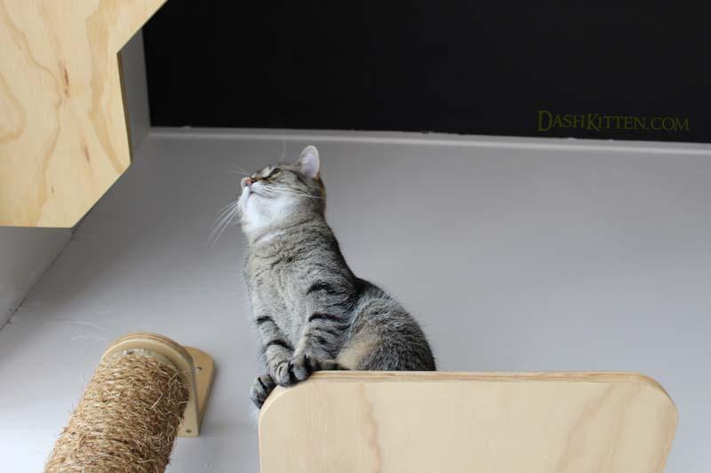 Lola Neko Ngeru Dash Kitten