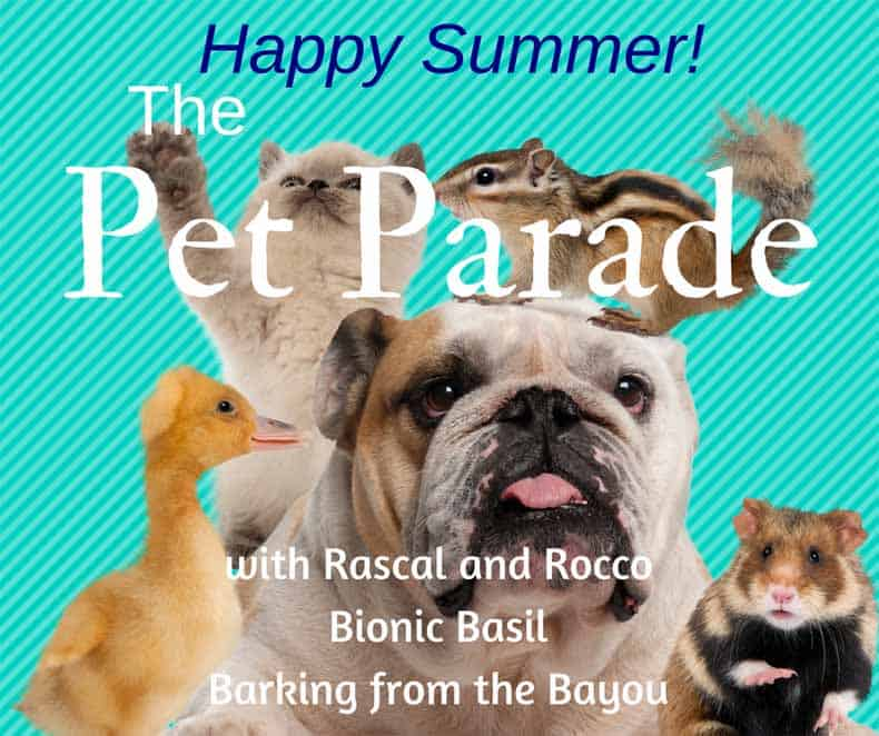 Pet Parade with Dash Kitten
