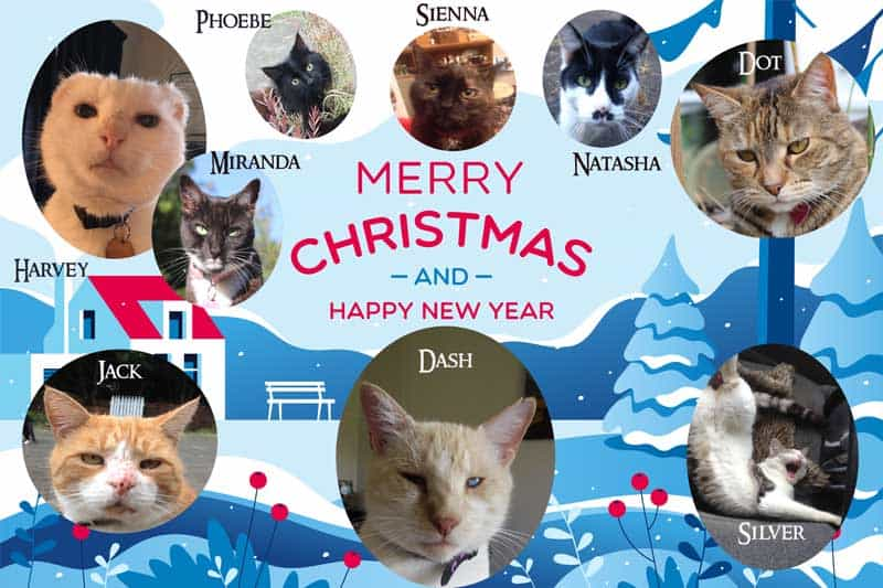 Christmas card for Dash Kitten