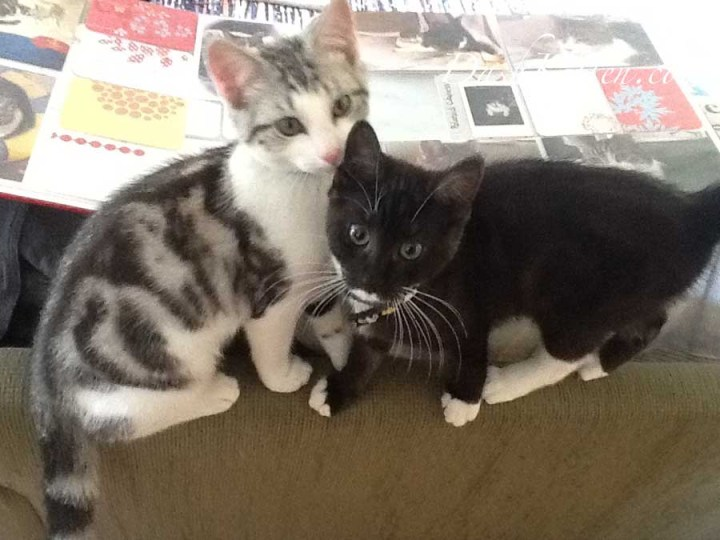 Miranda and Silver 2013 as small kittens. Photography gives you memories.