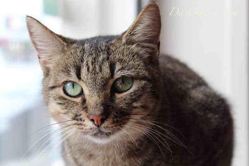 Beth cat closeup