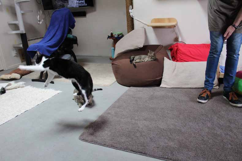 Fails with Settings Blurry Cat Demo Image