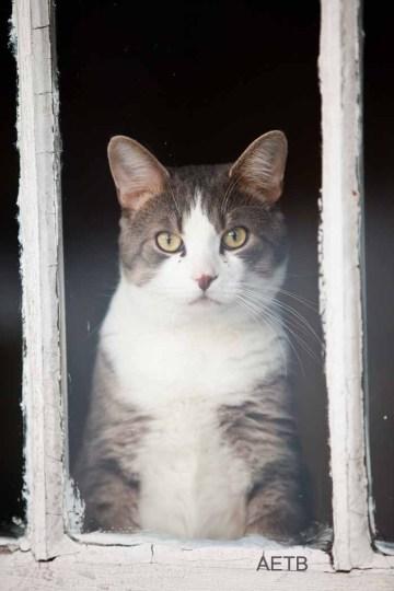 Cat Framed within a frame