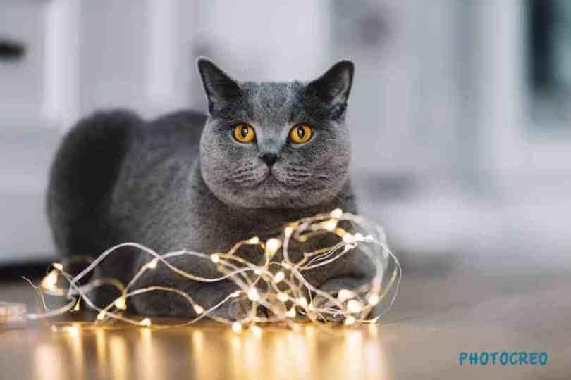 Reflections of lights featuring a cat