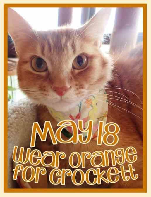 Orange cat portrait memorial for Crockett