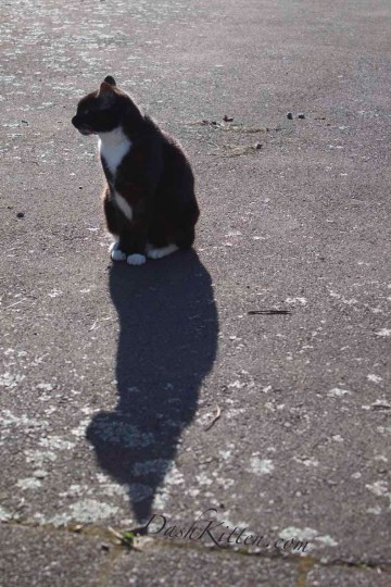 Miranda Cat silhouette DSLR