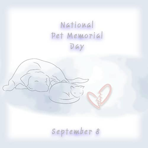 Pet Memorial Day graphic to remember deceased pets