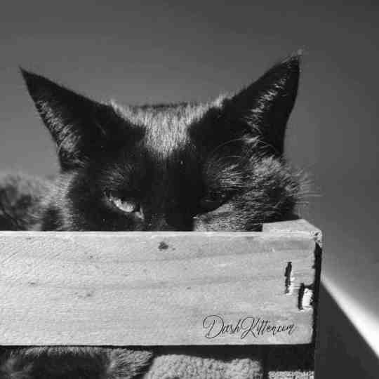 Contrasts in light and shade can add depth to a photograph, like this cat