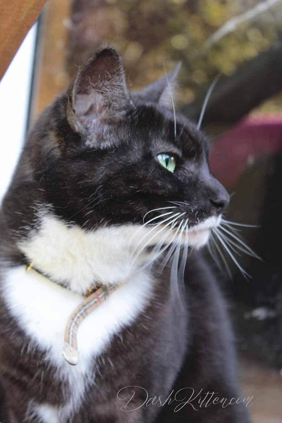 Miranda Cat Profile photograph