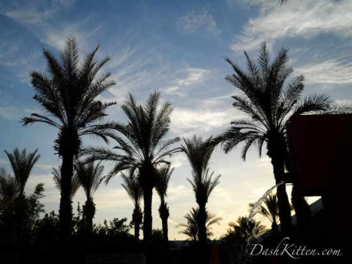 The contrast of light and dark in the palm trees of Arizona