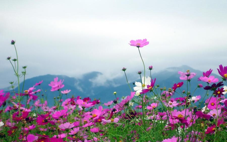 Nature Landscapes Flowers Plants Fields Mountains Sky Clouds