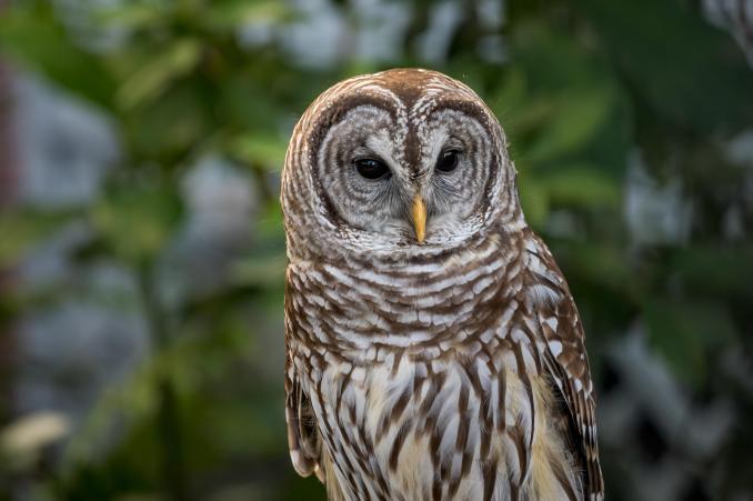wallpaper burung hantu, burung, predator, bulu hd: layar lebar: definisi  tinggi: layar penuh