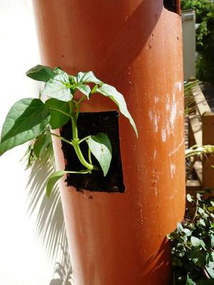 Giải pháp tuyệt vời cho nhà hẹp: Trồng cây thẳng đứng | ảnh 3