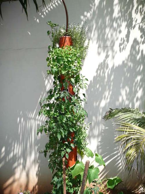 Giải pháp tuyệt vời cho nhà hẹp: Trồng cây thẳng đứng | ảnh 5