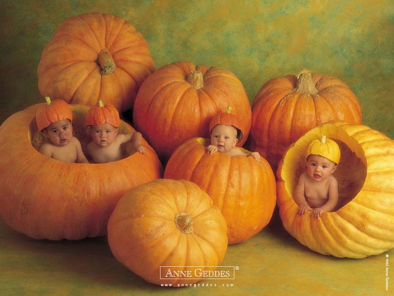 bébés citrouilles