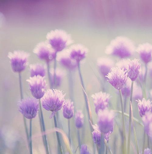 Morning_flowers_by_cvet04ek-d3hogyq_large
