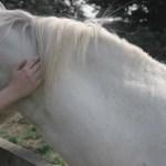 Image About Tumblr In Horses By E Q U E S T R I A N