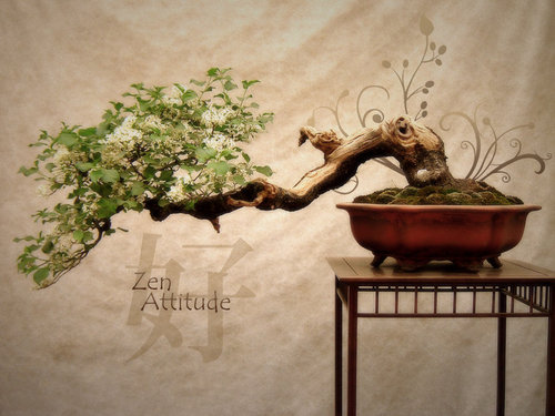 Zen_attitude_by_pickupjojo_large