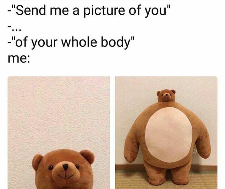 Send Me A Picture Of You I Am A Cute Fluffy Teddy D