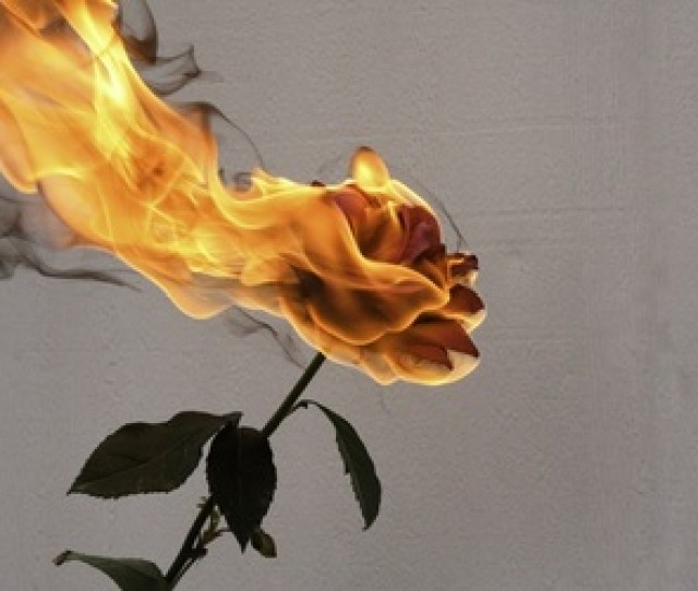Rose Fire And Flowers Image