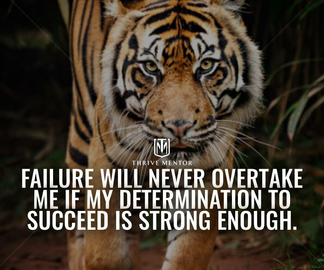 Tiger Quotes Images Stock Photos Vectors Shutterstock