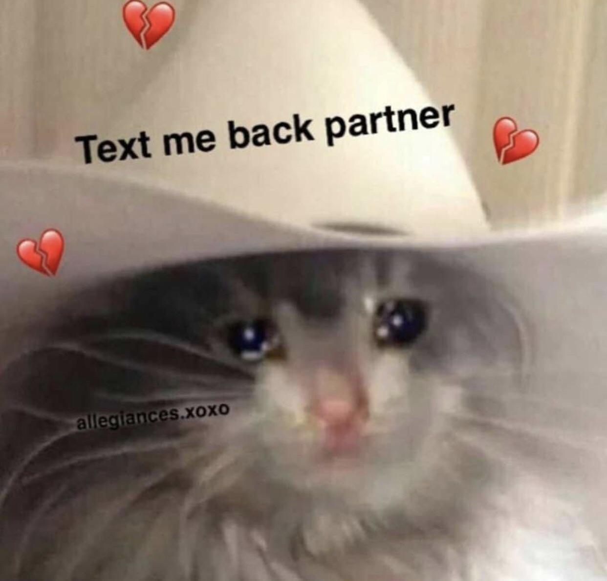Cat Crying Meme Generator لم يسبق له مثيل الصور Tier3 Xyz