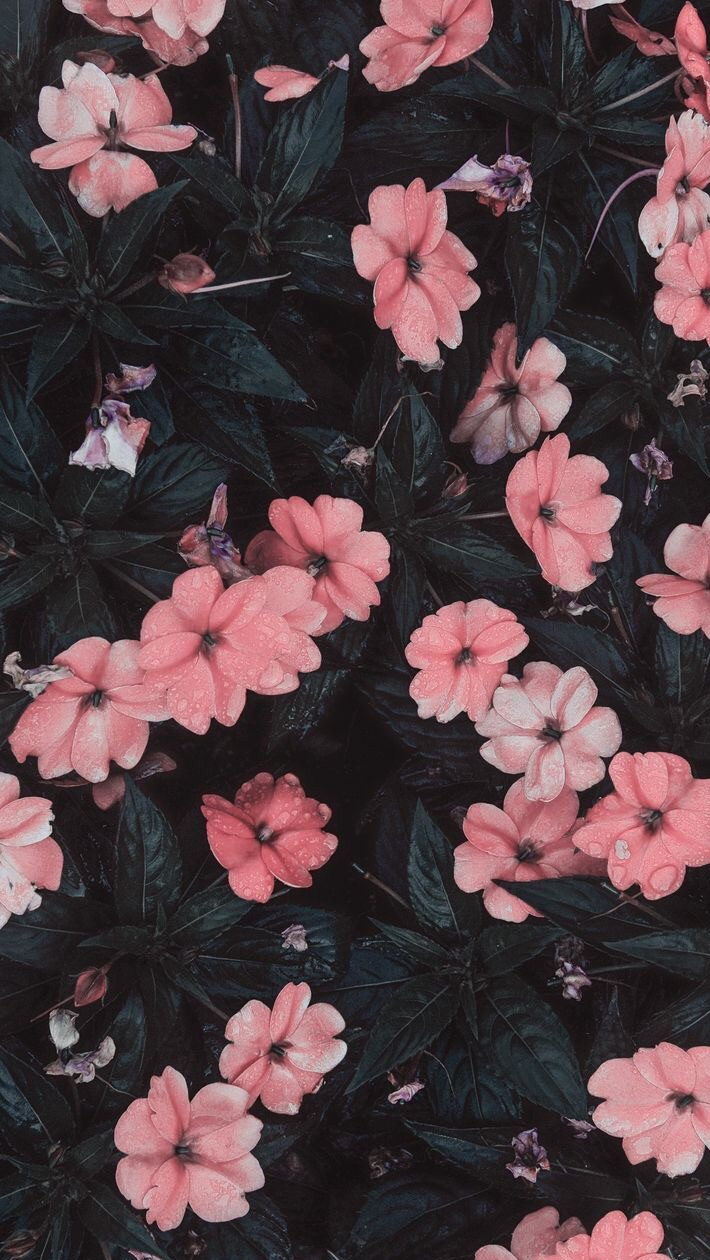 Fade Pink Flowers Iphone Wallpaper On We Heart It