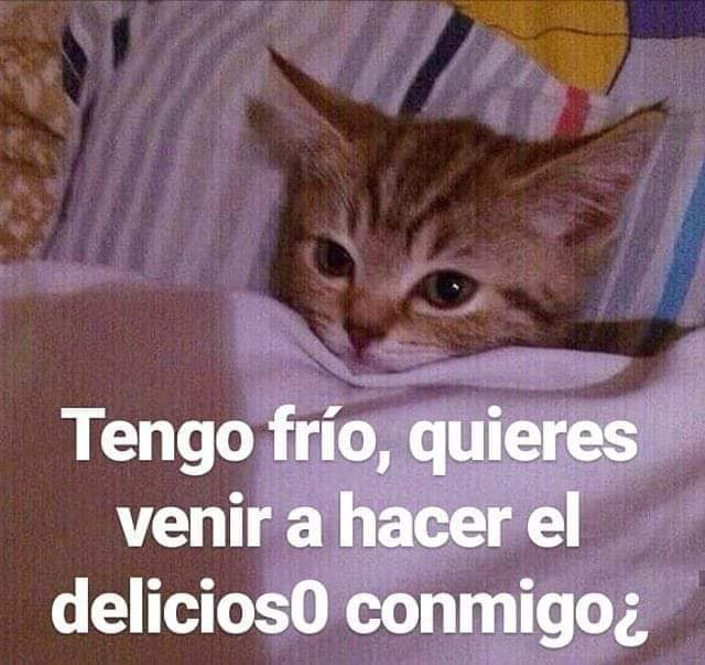Image In Memes Y Frases Collection By Mente Abierta